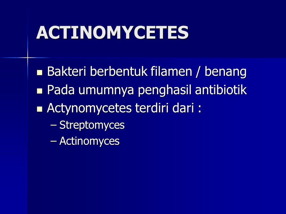 ACTINOMYCETES Bakteri berbentuk filamen / benang