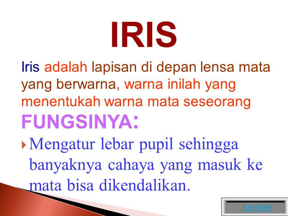 IRIS Iris adalah lapisan di depan lensa mata yang berwarna, warna inilah yang menentukah warna mata seseorang.