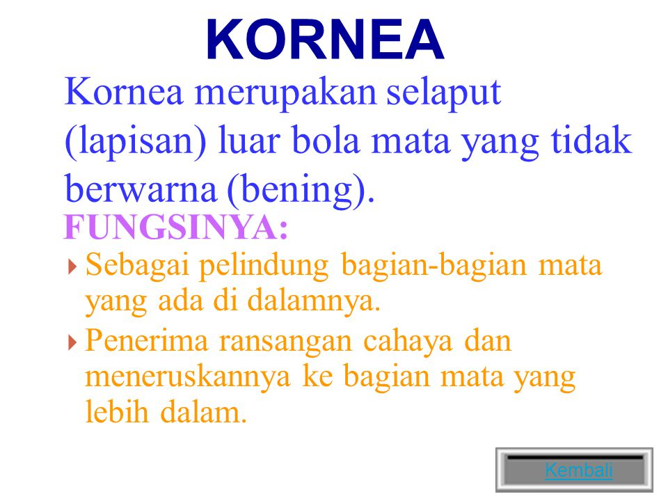 KORNEA Kornea merupakan selaput (lapisan) luar bola mata yang tidak berwarna (bening). FUNGSINYA: