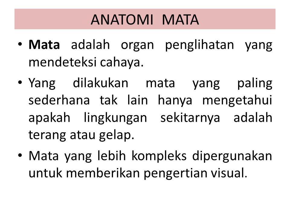ANATOMI MATA Mata adalah organ penglihatan yang mendeteksi cahaya.