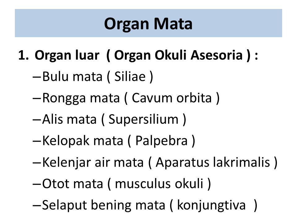 Organ Mata 1. Organ luar ( Organ Okuli Asesoria ) :