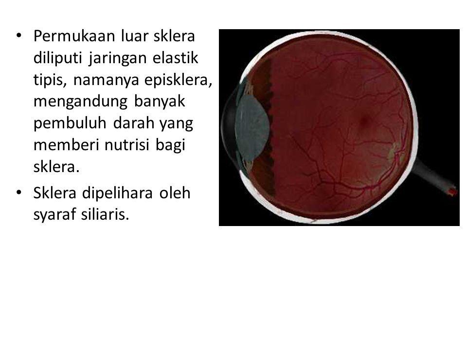 Permukaan luar sklera diliputi jaringan elastik tipis, namanya episklera, mengandung banyak pembuluh darah yang memberi nutrisi bagi sklera.