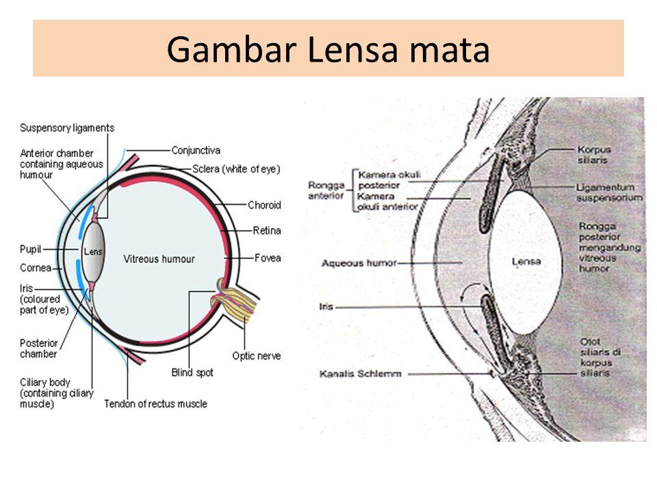 Gambar Lensa mata