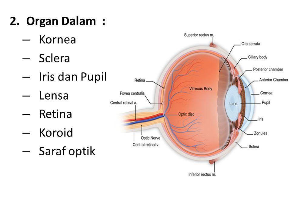 Organ Dalam : Kornea Sclera Iris dan Pupil Lensa Retina Koroid Saraf optik