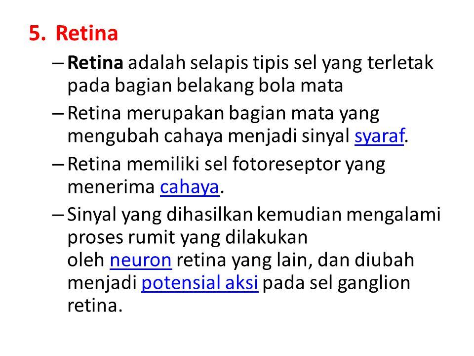 Retina Retina adalah selapis tipis sel yang terletak pada bagian belakang bola mata.