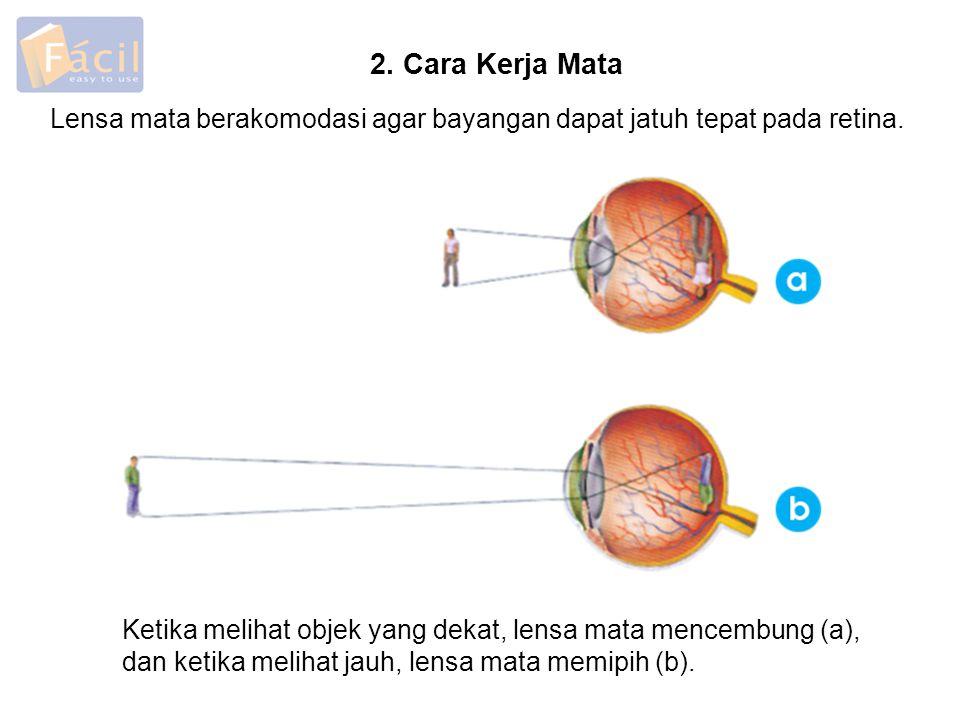 2. Cara Kerja Mata Lensa mata berakomodasi agar bayangan dapat jatuh tepat pada retina. Ketika melihat objek yang dekat, lensa mata mencembung (a),