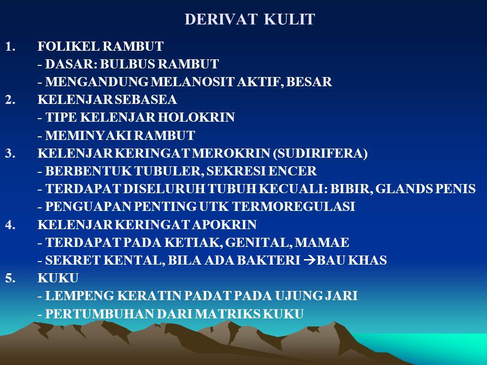 DERIVAT KULIT FOLIKEL RAMBUT - DASAR: BULBUS RAMBUT