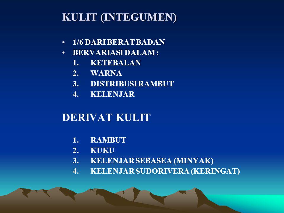 KULIT (INTEGUMEN) DERIVAT KULIT 1/6 DARI BERAT BADAN