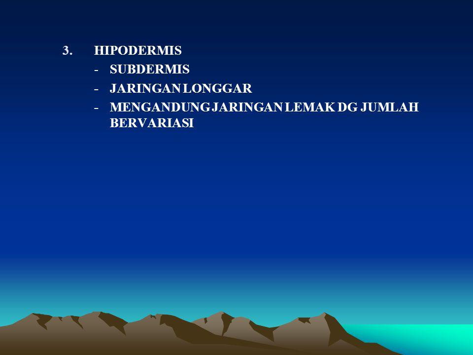 HIPODERMIS - SUBDERMIS - JARINGAN LONGGAR - MENGANDUNG JARINGAN LEMAK DG JUMLAH BERVARIASI