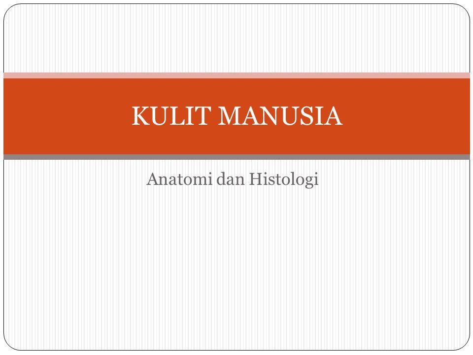KULIT MANUSIA Anatomi dan Histologi