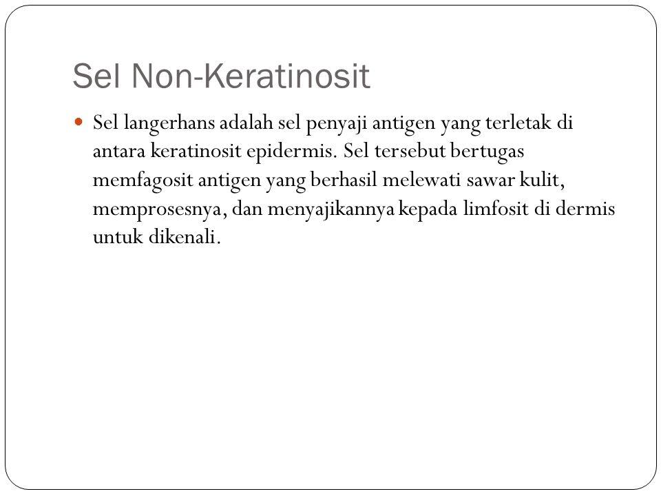 Sel Non-Keratinosit