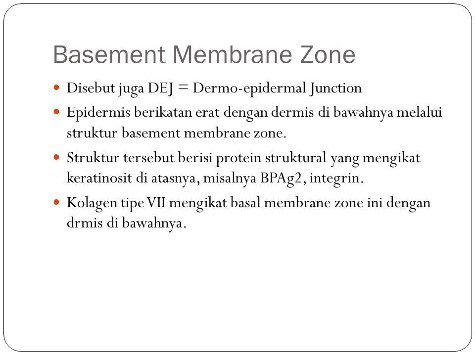 Basement Membrane Zone
