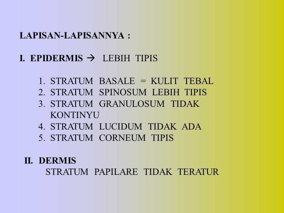 LAPISAN-LAPISANNYA : I. EPIDERMIS  LEBIH TIPIS. 1. STRATUM BASALE = KULIT TEBAL. 2. STRATUM SPINOSUM LEBIH TIPIS.
