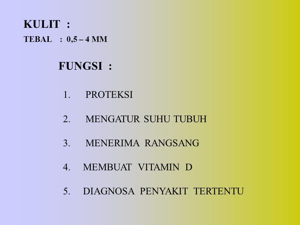 KULIT : TEBAL : 0,5 – 4 MM FUNGSI : 1. PROTEKSI 2. MENGATUR SUHU TUBUH