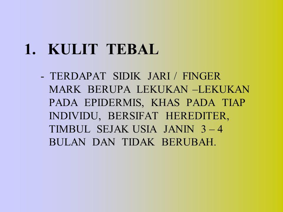 1. KULIT TEBAL - TERDAPAT SIDIK JARI / FINGER MARK BERUPA LEKUKAN –LEKUKAN PADA EPIDERMIS, KHAS PADA TIAP INDIVIDU, BERSIFAT HEREDITER, TIMBUL SEJAK USIA JANIN 3 – 4 BULAN DAN TIDAK BERUBAH.