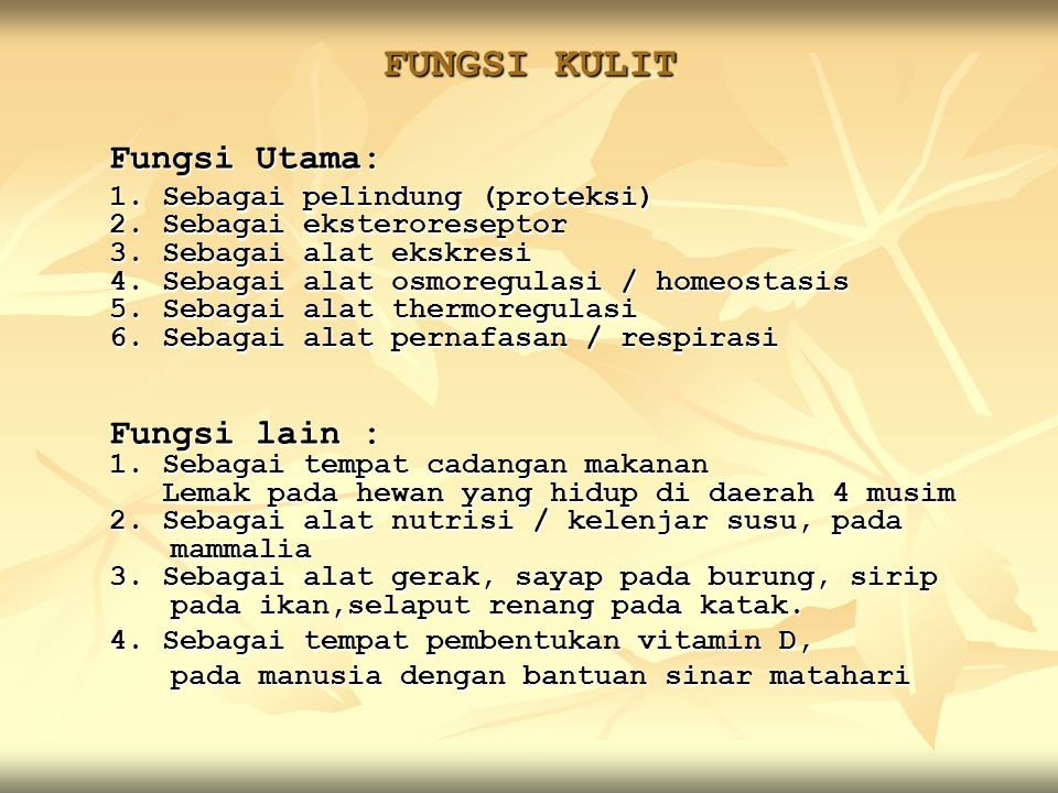 FUNGSI KULIT Fungsi Utama: