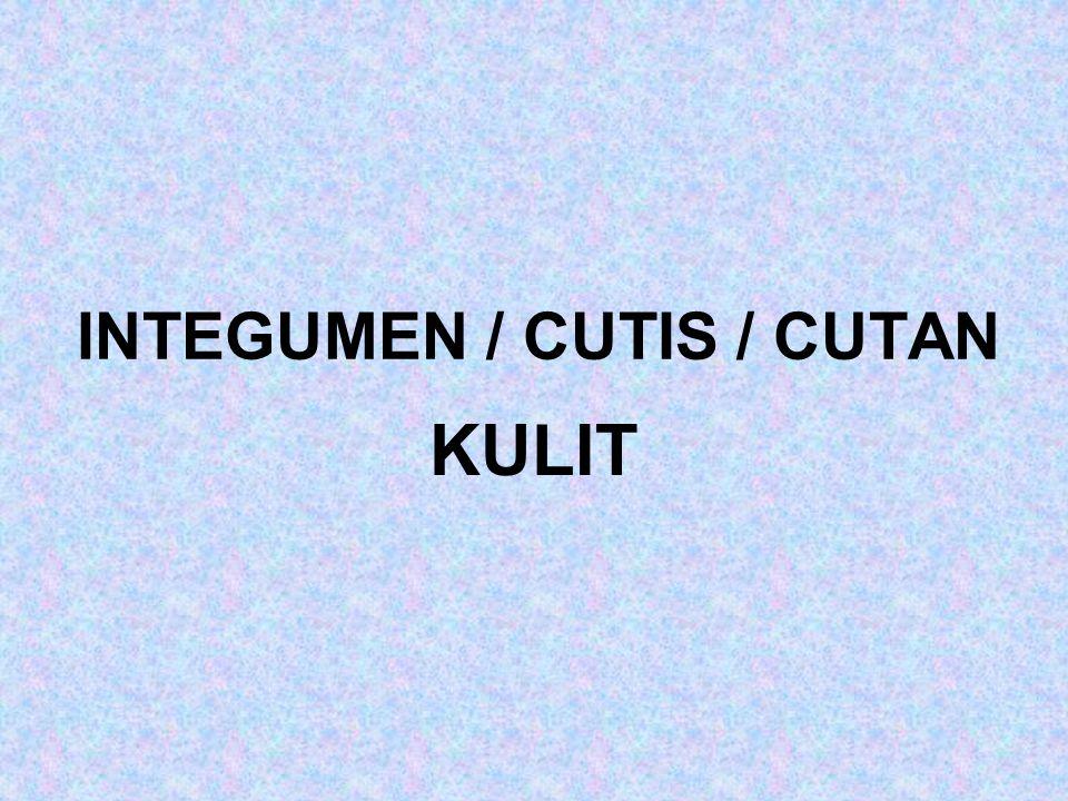 INTEGUMEN / CUTIS / CUTAN