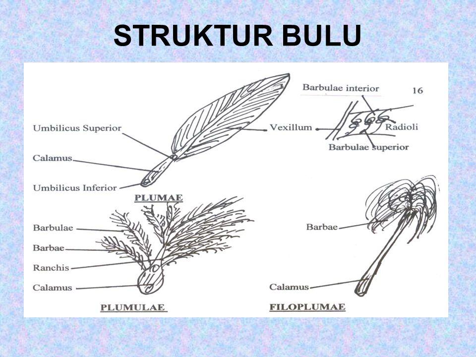 STRUKTUR BULU
