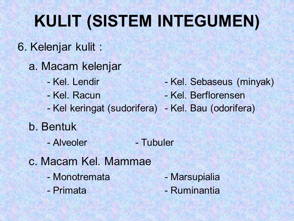 KULIT (SISTEM INTEGUMEN)