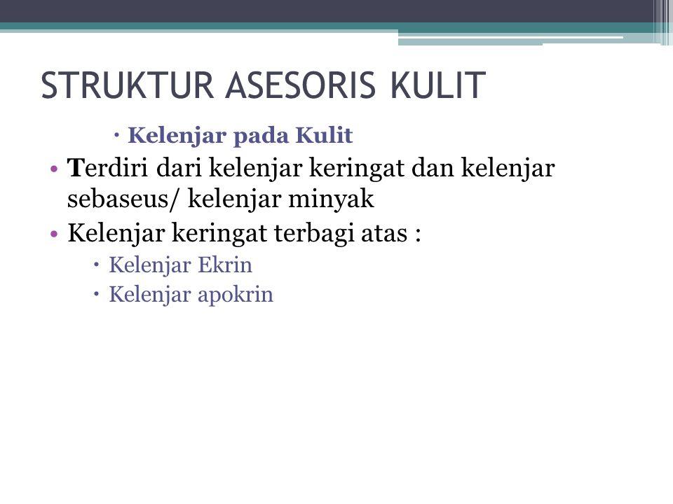 STRUKTUR ASESORIS KULIT