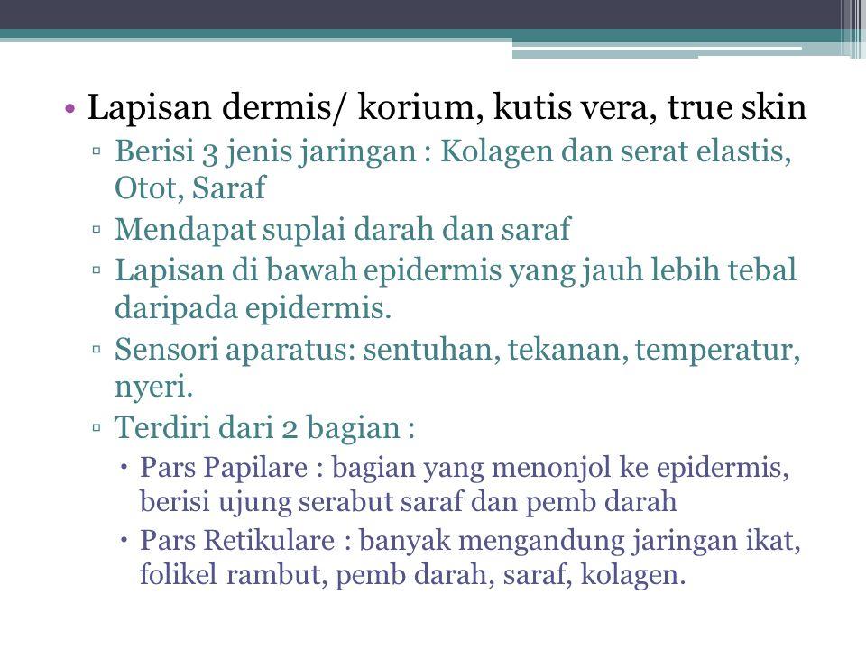 Lapisan dermis/ korium, kutis vera, true skin