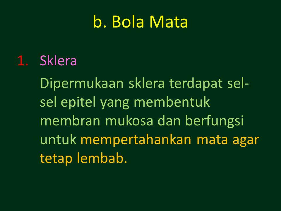 b. Bola Mata Sklera.