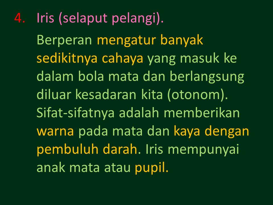 Iris (selaput pelangi).