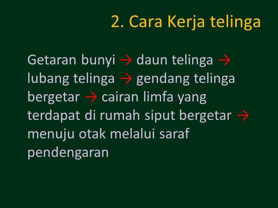 2. Cara Kerja telinga