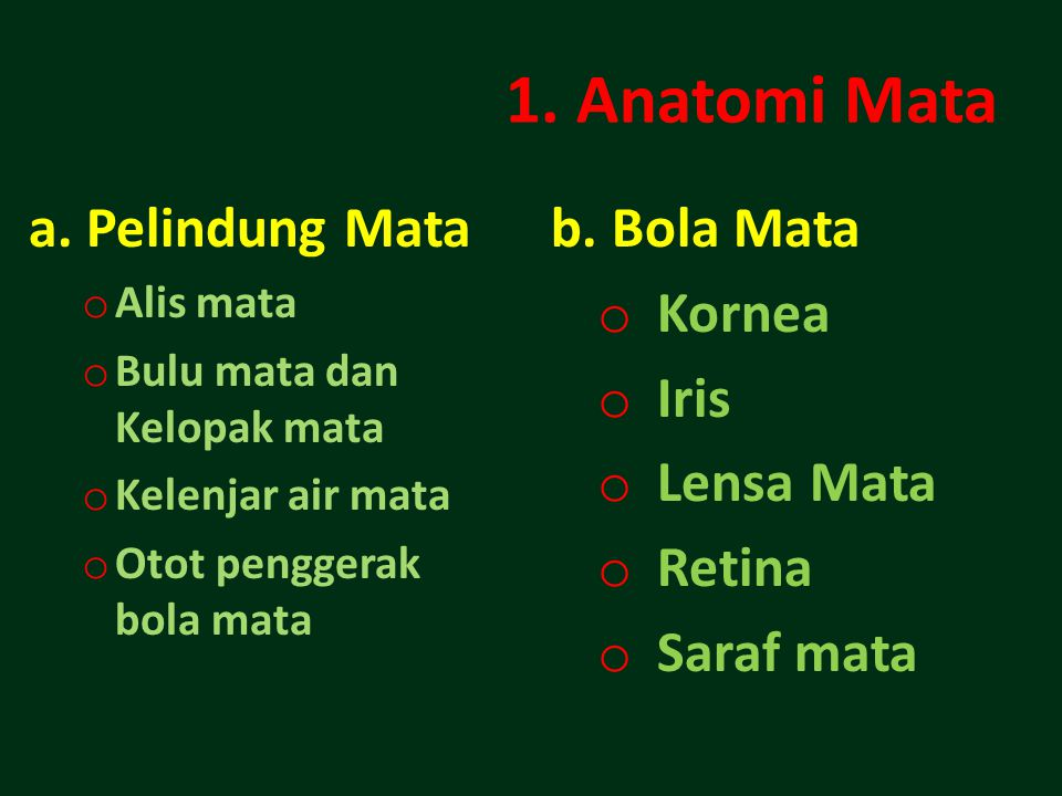1. Anatomi Mata a. Pelindung Mata b. Bola Mata Kornea Iris Lensa Mata
