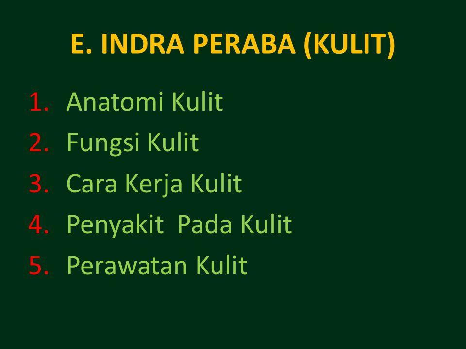 E. INDRA PERABA (KULIT) Anatomi Kulit Fungsi Kulit Cara Kerja Kulit