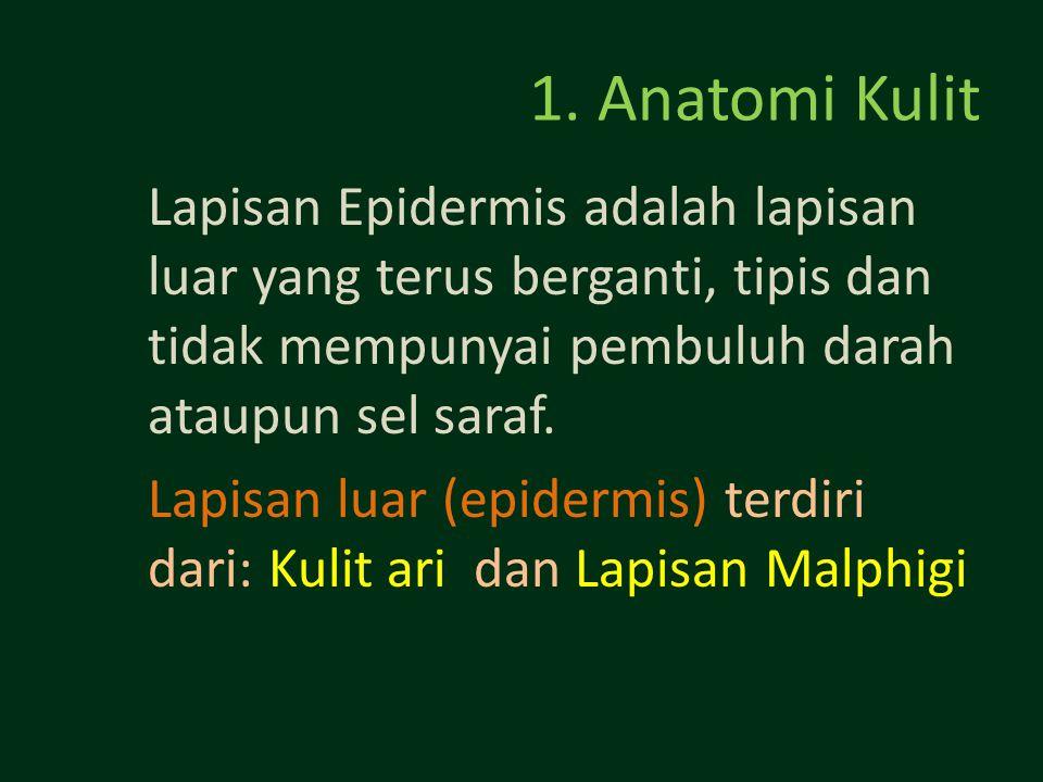 1. Anatomi Kulit Lapisan Epidermis adalah lapisan luar yang terus berganti, tipis dan tidak mempunyai pembuluh darah ataupun sel saraf.