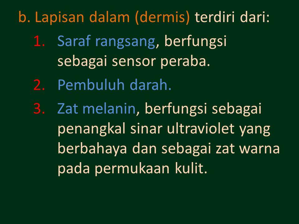 b. Lapisan dalam (dermis) terdiri dari: