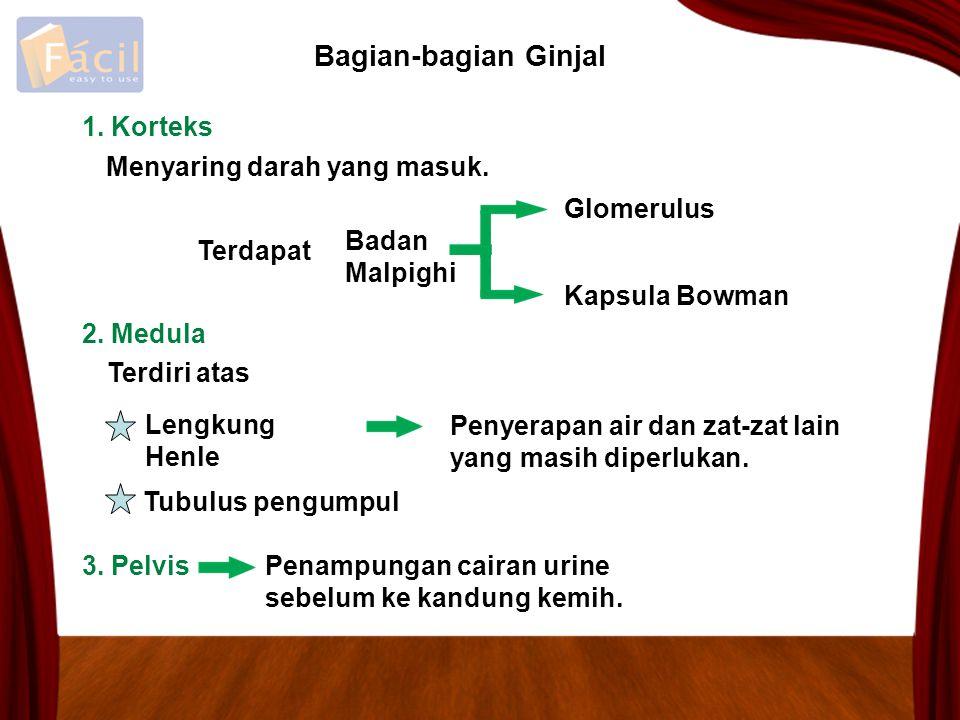 Bagian-bagian Ginjal 1. Korteks Menyaring darah yang masuk. Glomerulus