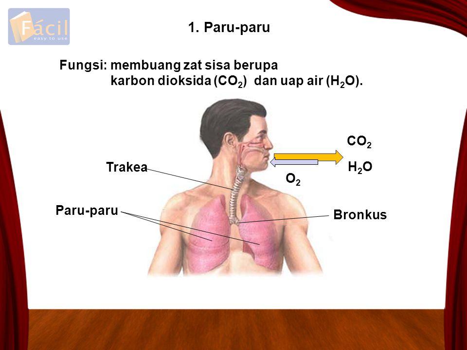 1. Paru-paru Fungsi: membuang zat sisa berupa