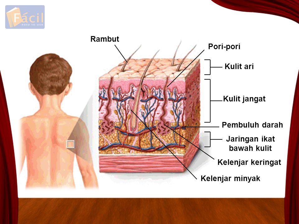 Jaringan ikat bawah kulit