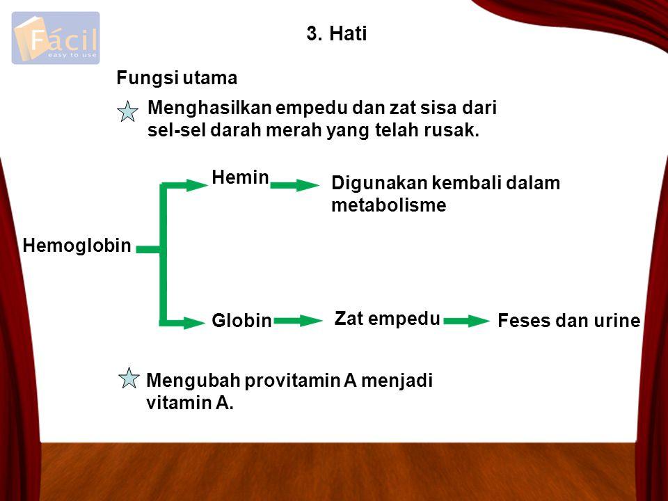 3. Hati Fungsi utama. Menghasilkan empedu dan zat sisa dari sel-sel darah merah yang telah rusak. Hemin.