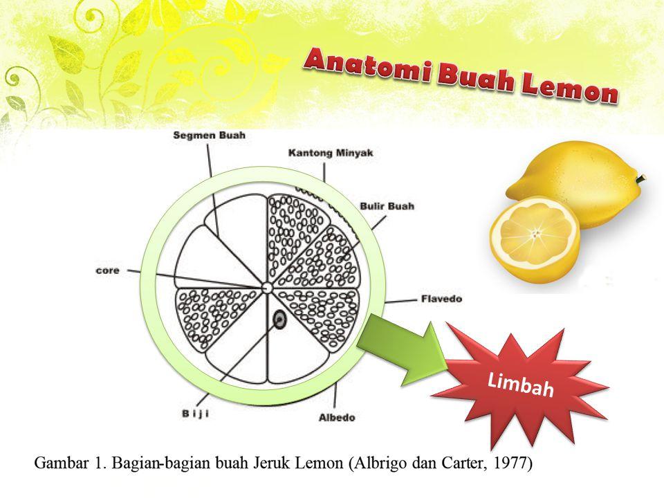 Anatomi Buah Lemon Limbah