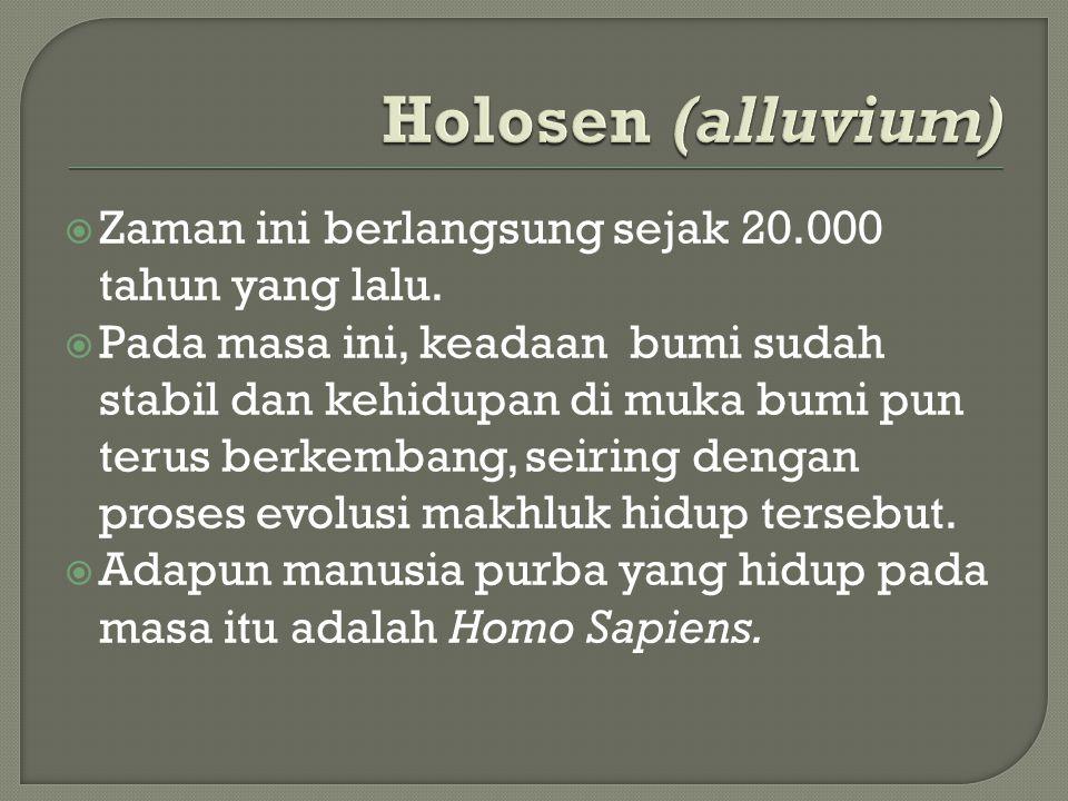 Holosen (alluvium) Zaman ini berlangsung sejak 20.000 tahun yang lalu.