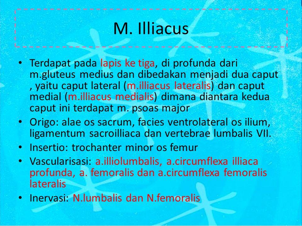 M. Illiacus