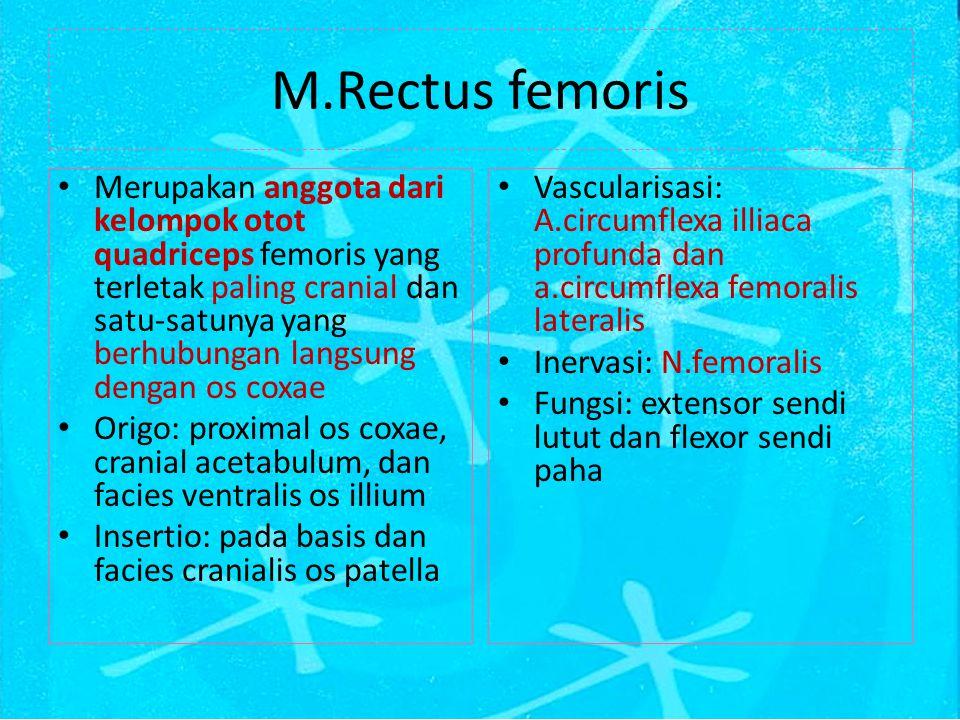 M.Rectus femoris
