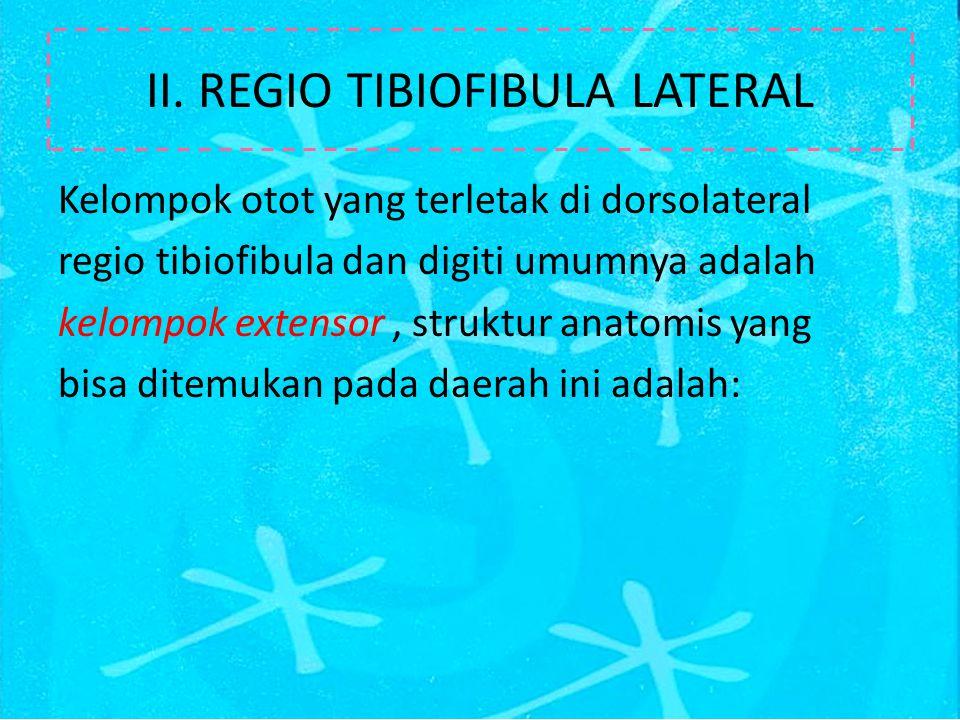 II. REGIO TIBIOFIBULA LATERAL