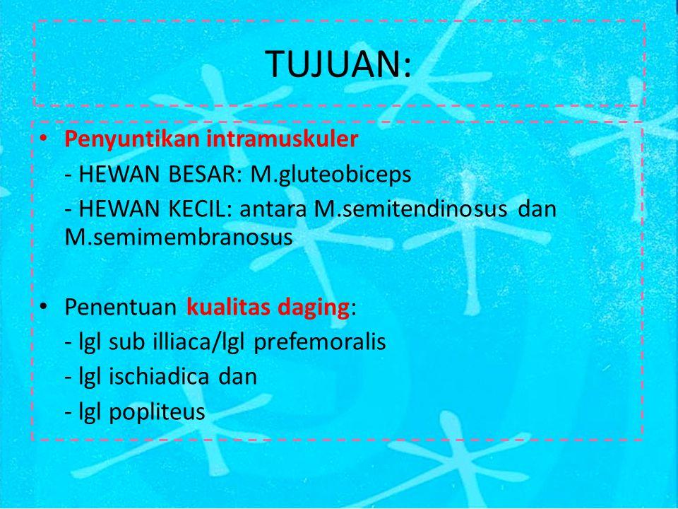 TUJUAN: Penyuntikan intramuskuler - HEWAN BESAR: M.gluteobiceps