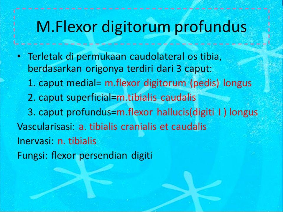 M.Flexor digitorum profundus