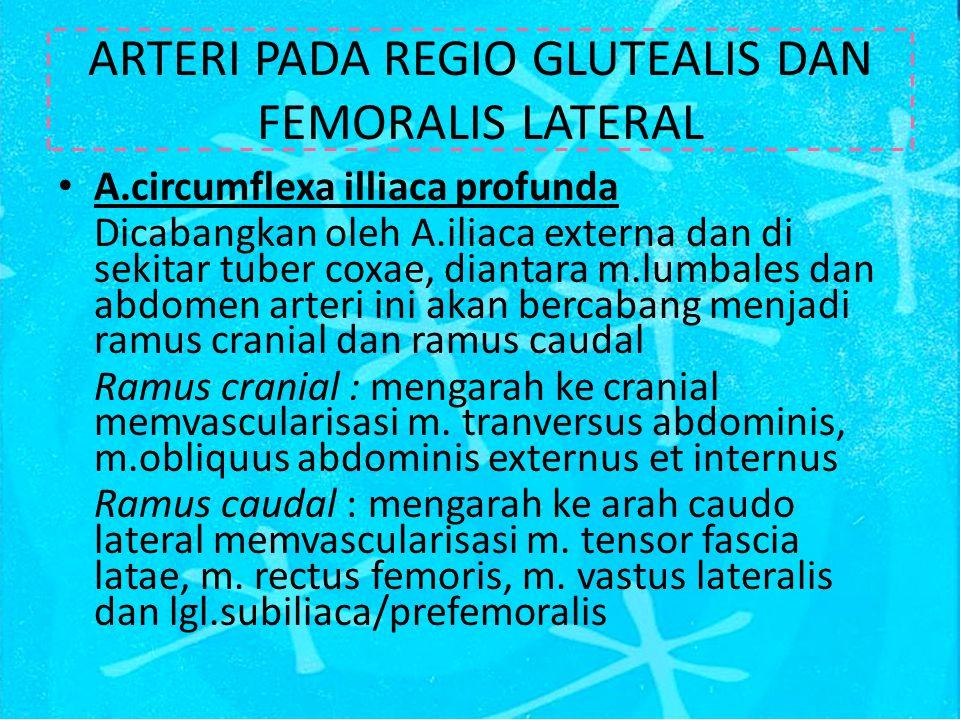ARTERI PADA REGIO GLUTEALIS DAN FEMORALIS LATERAL
