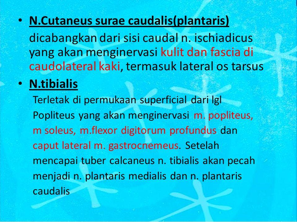 N.Cutaneus surae caudalis(plantaris)