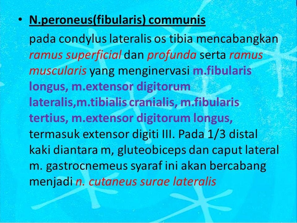 N.peroneus(fibularis) communis