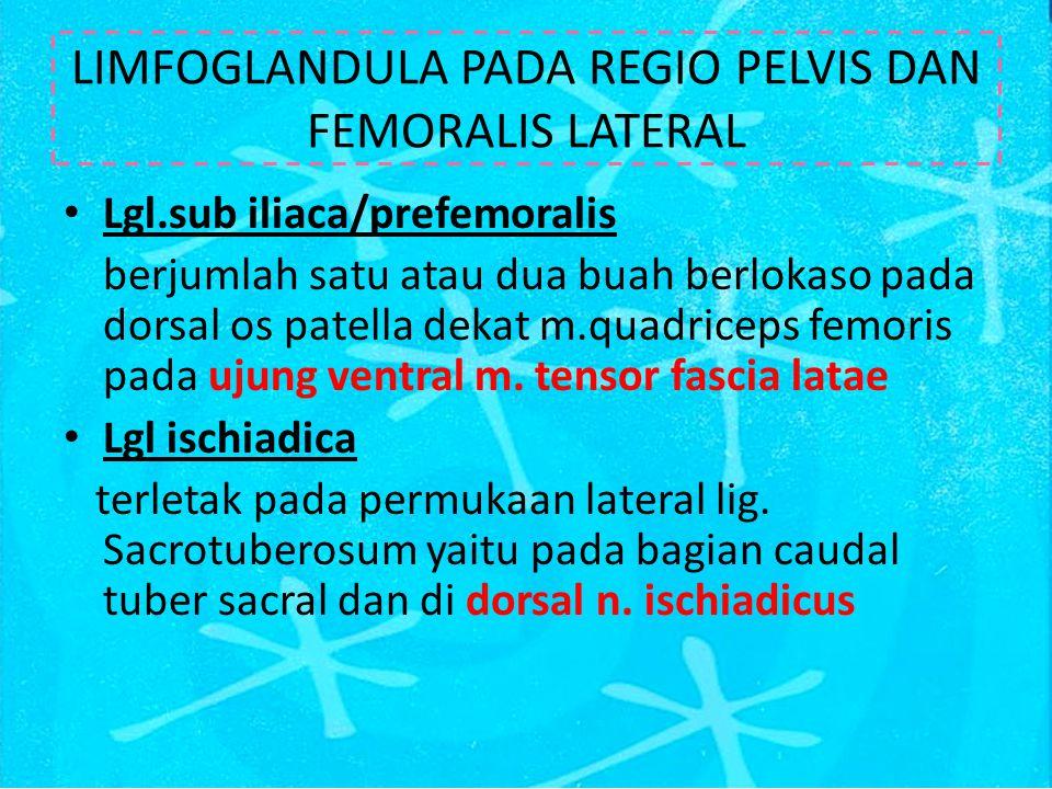 LIMFOGLANDULA PADA REGIO PELVIS DAN FEMORALIS LATERAL
