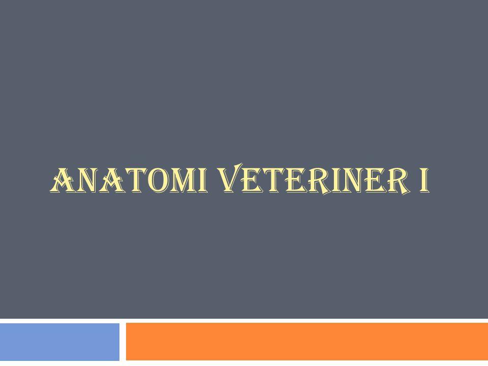ANATOMI VETERINER I