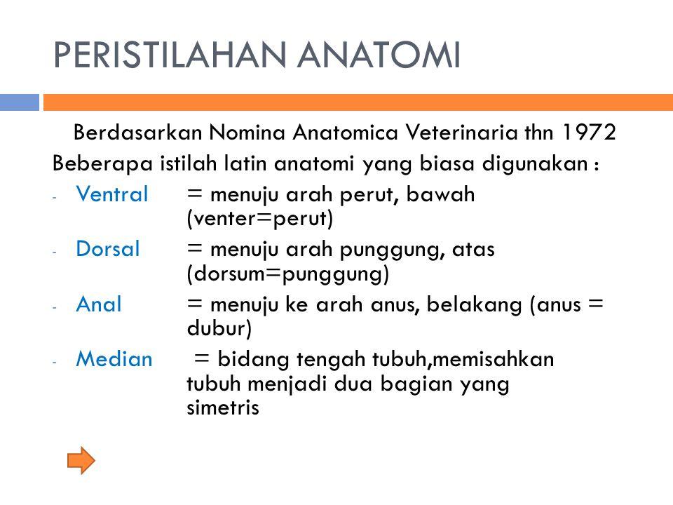 Berdasarkan Nomina Anatomica Veterinaria thn 1972