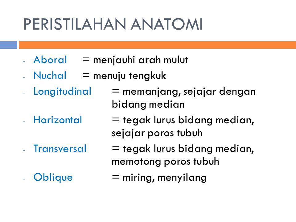 PERISTILAHAN ANATOMI Aboral = menjauhi arah mulut